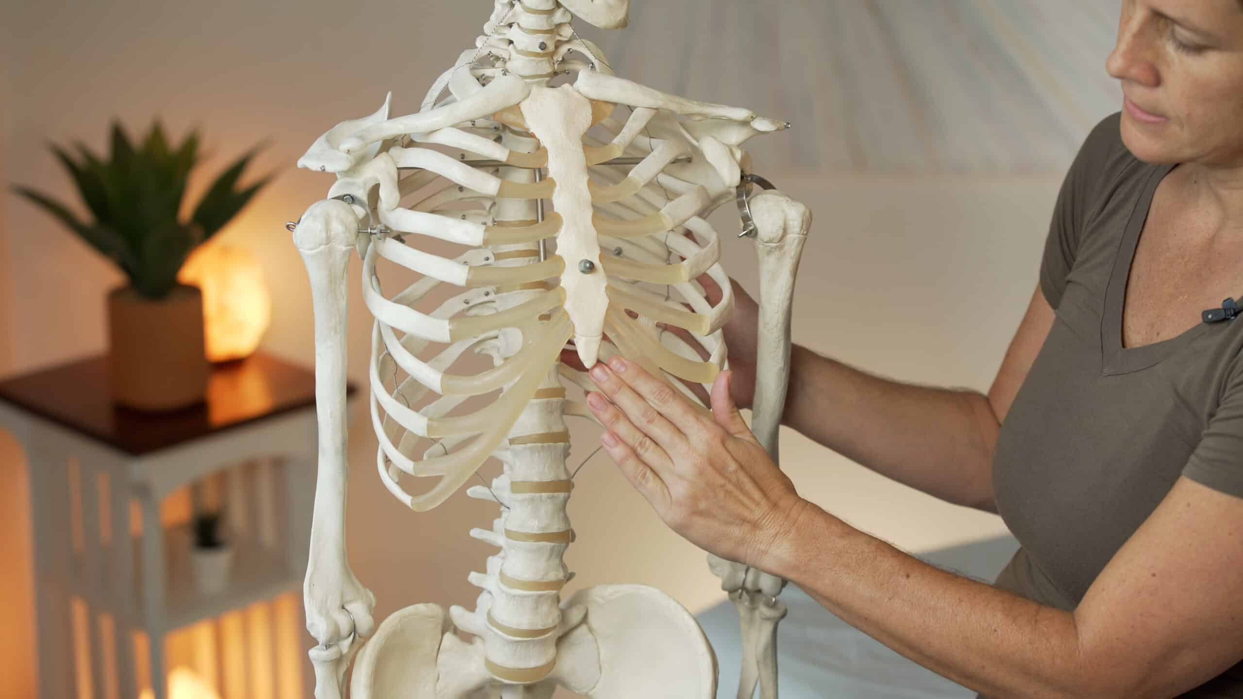 a massage therapist explains anatomy with a skeleton model